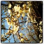 Blüten vor dem hellblauen Himmel