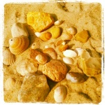 Muscheln und Steine