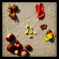 Dinge geordnet für Herbstliches Mandala