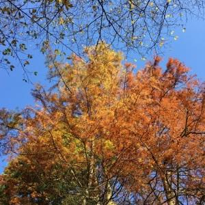 Orange farbene Herbstblätter