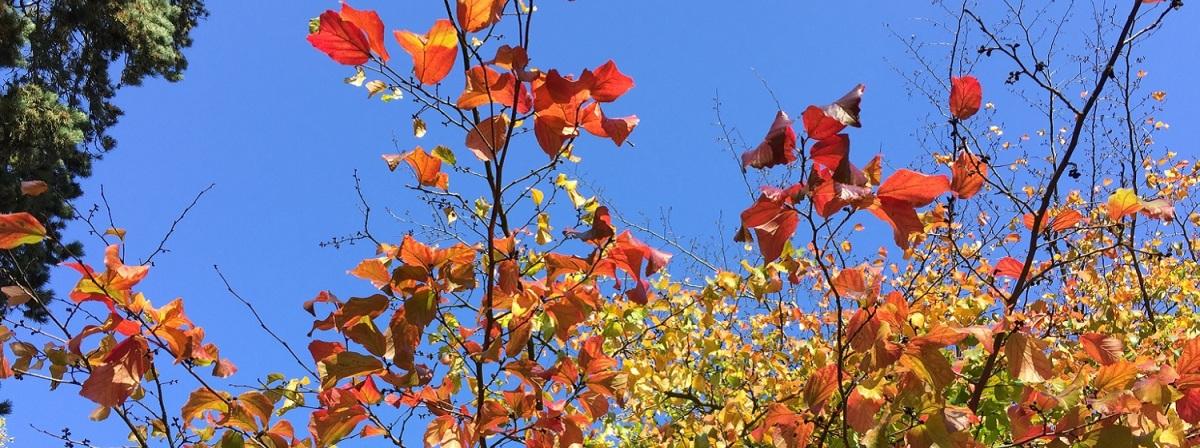 Herbst-Meditation